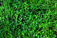 Pequeña hoja verde tropical para el fondo imágenes de archivo libres de regalías
