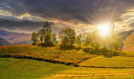 Pequeña huerta en un campo rural herboso en la puesta del sol imagen de archivo libre de regalías