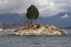 Pequeña isla con el árbol Fotos de archivo libres de regalías