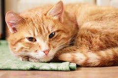 Pequeña Kitten Sleeping On Bed roja fotos de archivo