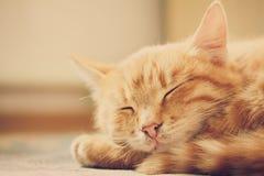 Pequeña Kitten Sleeping On Bed roja imagen de archivo libre de regalías