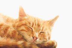 Pequeña Kitten Sleeping On White Background roja imagenes de archivo