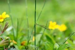 Pequeña libélula en una mañana soleada fotos de archivo libres de regalías