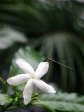 Pequeña libélula oscura Imagen de archivo libre de regalías