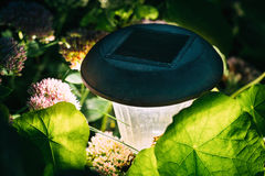Pequeña luz solar decorativa del jardín, linternas en cama de flor solar Fotos de archivo libres de regalías