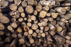 Pequeña madera Foto de archivo
