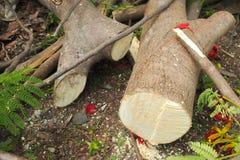 Pequeña madera dos fotografía de archivo libre de regalías