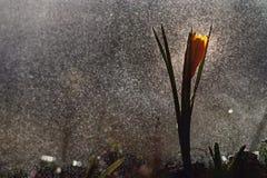 Pequeña magia amarilla de la reflexión del espray de las flores Imagen de archivo libre de regalías