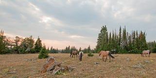 Pequeña manada de los caballos salvajes que pastan al lado de registros del deadwood en la puesta del sol en la gama del caballo  imagen de archivo libre de regalías