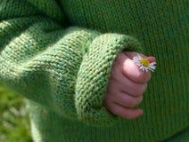 Pequeña mano, pequeña flor Imagenes de archivo