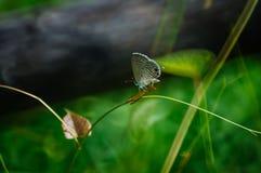Pequeña mariposa Foto de archivo
