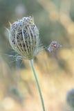 Pequeña mariposa delicada equilibrada Imagen de archivo libre de regalías