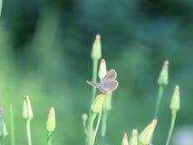 Pequeña mariposa en una planta Fotos de archivo libres de regalías