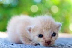 Pequeña mentira del gatito Imágenes de archivo libres de regalías