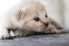 Pequeña mentira del gatito Imagenes de archivo