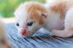 Pequeña mentira del gatito Fotografía de archivo