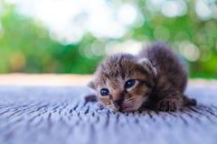 Pequeña mentira del modelo del tigre del gatito Fotografía de archivo libre de regalías