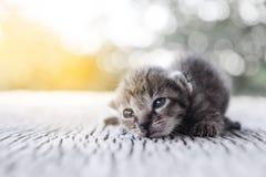 Pequeña mentira del modelo del tigre del gatito Imagen de archivo