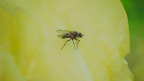 Pequeña mosca que se prepara para el despegue Fotos de archivo libres de regalías