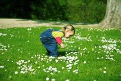 Pequeña muchacha en el prado Imagen de archivo libre de regalías
