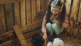 Pequeña muchacha en viajes al zoo-granja Conejo de alimentación de la muchacha con una zanahoria en el zoo-granja almacen de video