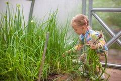 Pequeña muchacha linda con las cebollas de la cosecha en un invernadero fotografía de archivo libre de regalías