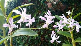 Pequeña orquídea de la flor tropical fotos de archivo
