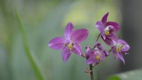 Pequeña orquídea violeta en bosque almacen de video