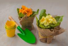 Pequeña pala de la primavera amarilla y cubo decorativo Foto de archivo libre de regalías