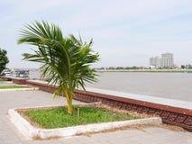 Pequeña palma en el lado de un río con una pequeña ciudad en el fondo Fotografía de archivo libre de regalías