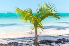 Pequeña palmera en el centro turístico imagen de archivo libre de regalías