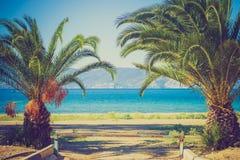 pequeña palmera en la playa Imágenes de archivo libres de regalías