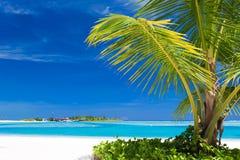 Pequeña palmera que cuelga sobre laguna azul Imagen de archivo