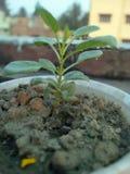 Pequeña pequeña planta imagen de archivo