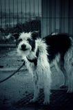 Pequeña perrera del perro Imagen de archivo libre de regalías