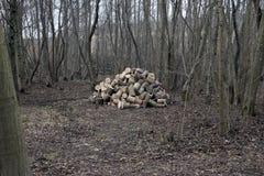 Pequeña pila de madera fresca del árbol de ceniza del aliso en pequeño nutwood de madera de la arboleda del bosque Fotografía de archivo libre de regalías