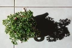 Pequeña planta Foto de archivo libre de regalías