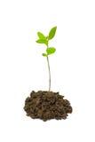 Pequeña planta Imágenes de archivo libres de regalías