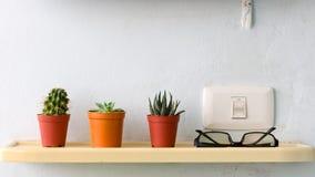 Pequeña planta del cacto tres en crisol plástico Foto de archivo