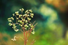 Pequeña planta en el revestimiento de la naturaleza de Shimla imagenes de archivo