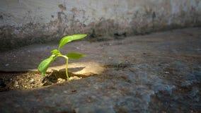 Pequeña planta en el sol en un lugar ocultado imagenes de archivo