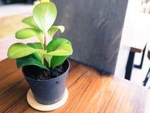 Pequeña planta en la tabla Imagen de archivo libre de regalías