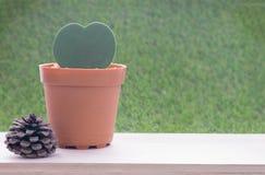 Pequeña planta en maceta de la forma del corazón y fruta de árbol seca de pino Imagenes de archivo