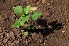 Pequeña planta en suelo Foto de archivo