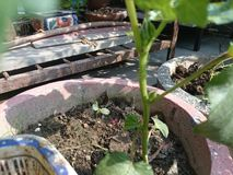 Pequeña planta en un crisol Fotografía de archivo