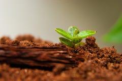 Pequeña planta que crece después de primavera Imagen de archivo libre de regalías