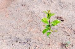 Pequeña planta que crece en la tierra sucia fotografía de archivo