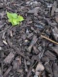 Pequeña planta que crece en pajote fotografía de archivo