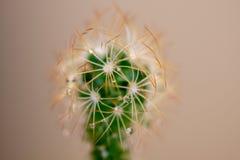 Pequeña planta sacada en varias fotos macras imágenes de archivo libres de regalías