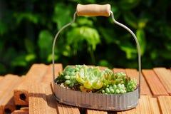 Pequeña planta suculenta verde en cesta en fondo del ladrillo imagenes de archivo